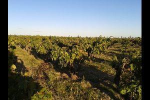 Spanische Weine - Weinprobe mit Einführung