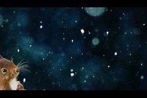 Herr Eichhorn und der erste Schnee